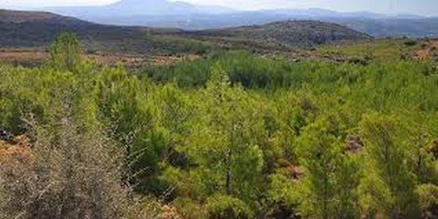 Πάνω από 300 εκ. ευρώ για την ανάπτυξη δασικών περιοχών