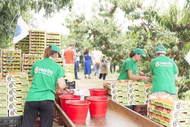 Lidl: Πως προσφέρει καθημερινά ολόφρεσκα φρούτα και λαχανικά