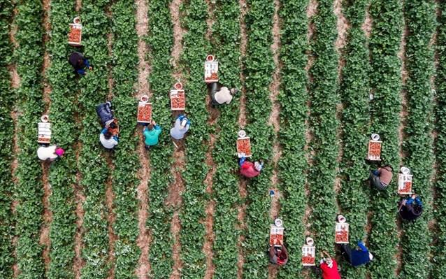 Πόση ενίσχυση δικαιούνται οι νέοι αγρότες