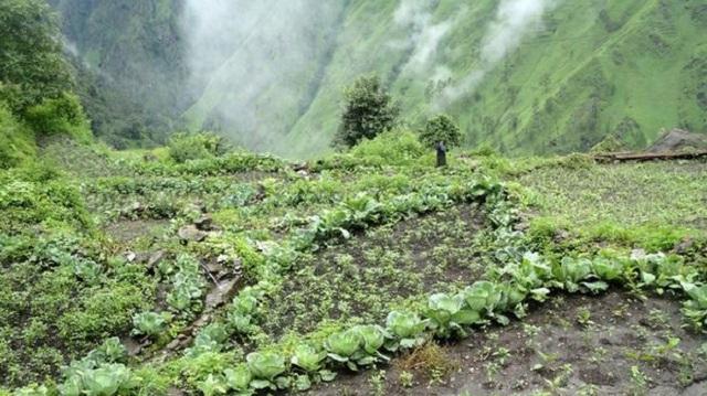 Αγροοικολογία, το μέλλον για μια βιώσιμη γεωργία