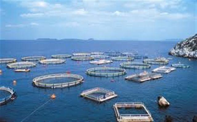 Βρετανία: Χάνουν μερίδιο οι ελληνικές εξαγωγές ιχθύων και θαλασσινών