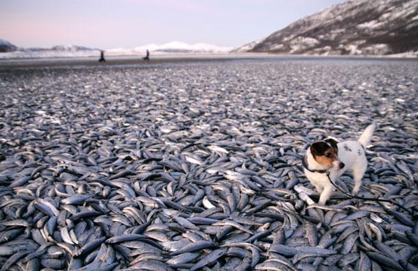 Θα ξεμείνουμε απο...ψάρια;