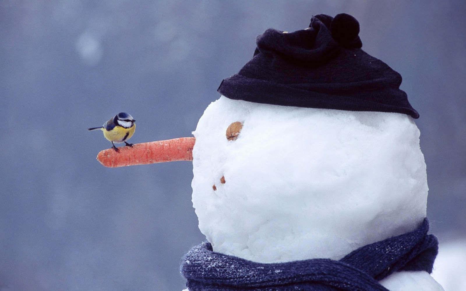 Αποτέλεσμα εικόνας για χιονια